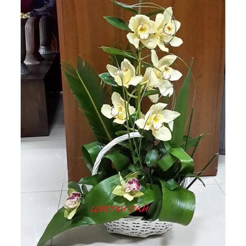 Кошница с орхидеи - Грация