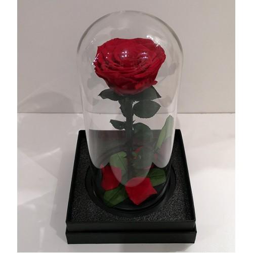 Вечна червена роза в стъкленица